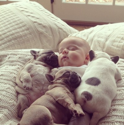 baby sleeping with dogs