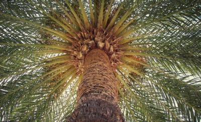 Hoe haal je Ibiza naar je tuin?