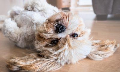 een diervriendelijke vloer voor je huisdier