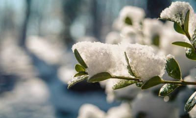 warm blijven in de winter tuin